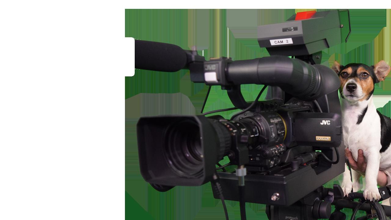 kamer-brave